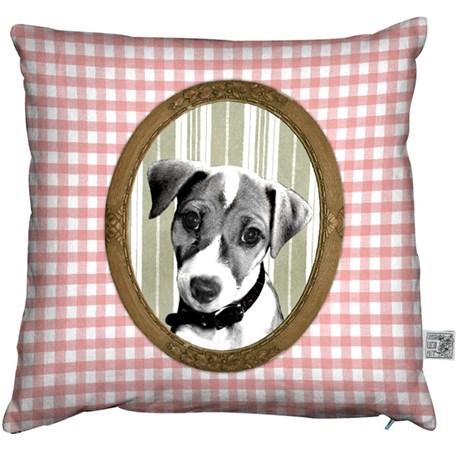 Kuddfodral – hundar
