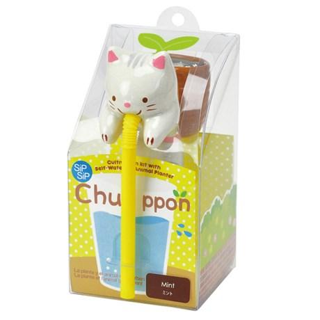 Odlingsset – Chuppon Katt – Mynta