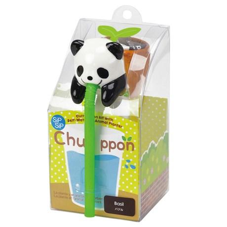 Odlingsset - Chuppon, Panda - Basilika