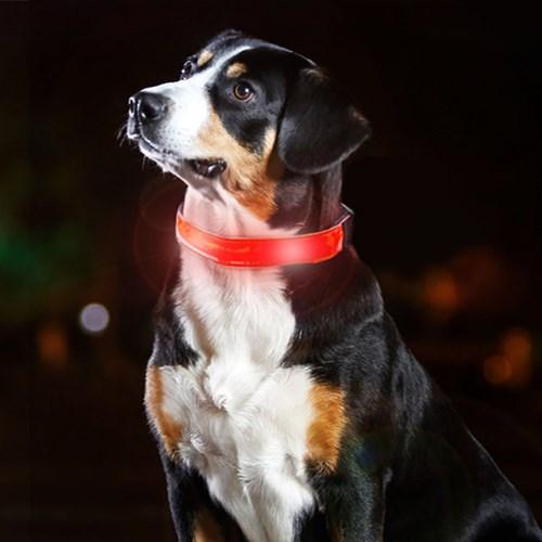 Hundhalsband med LED-belysning, Röd